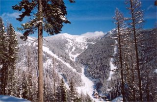 Snowbowl's terrain rises steeply above a compact base area. (photo courtesy Montana Snowbowl)