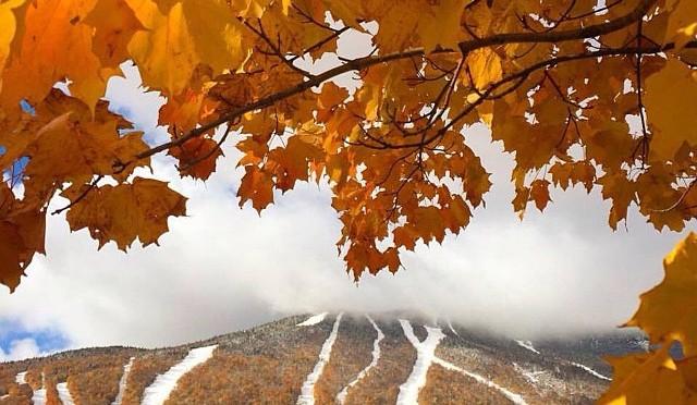 PHOTOS: Northeastern Snowliage