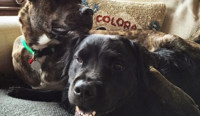 Lindsey Vonn's dogs Bear and Leo. (photo: Instagram)